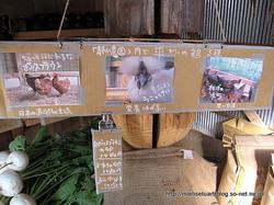静か農園の鶏3種